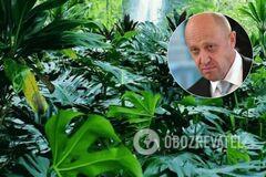 'Могла быть спецоперация': в 'гибели' повара Путина нашли важный нюанс