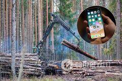Вирубування лісів можна відстежити онлайн: стало відомо, де в Україні запустили новий проєкт