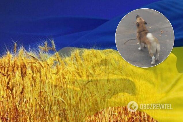 Украинцев покорило видео ВСУ с псом-патриотом