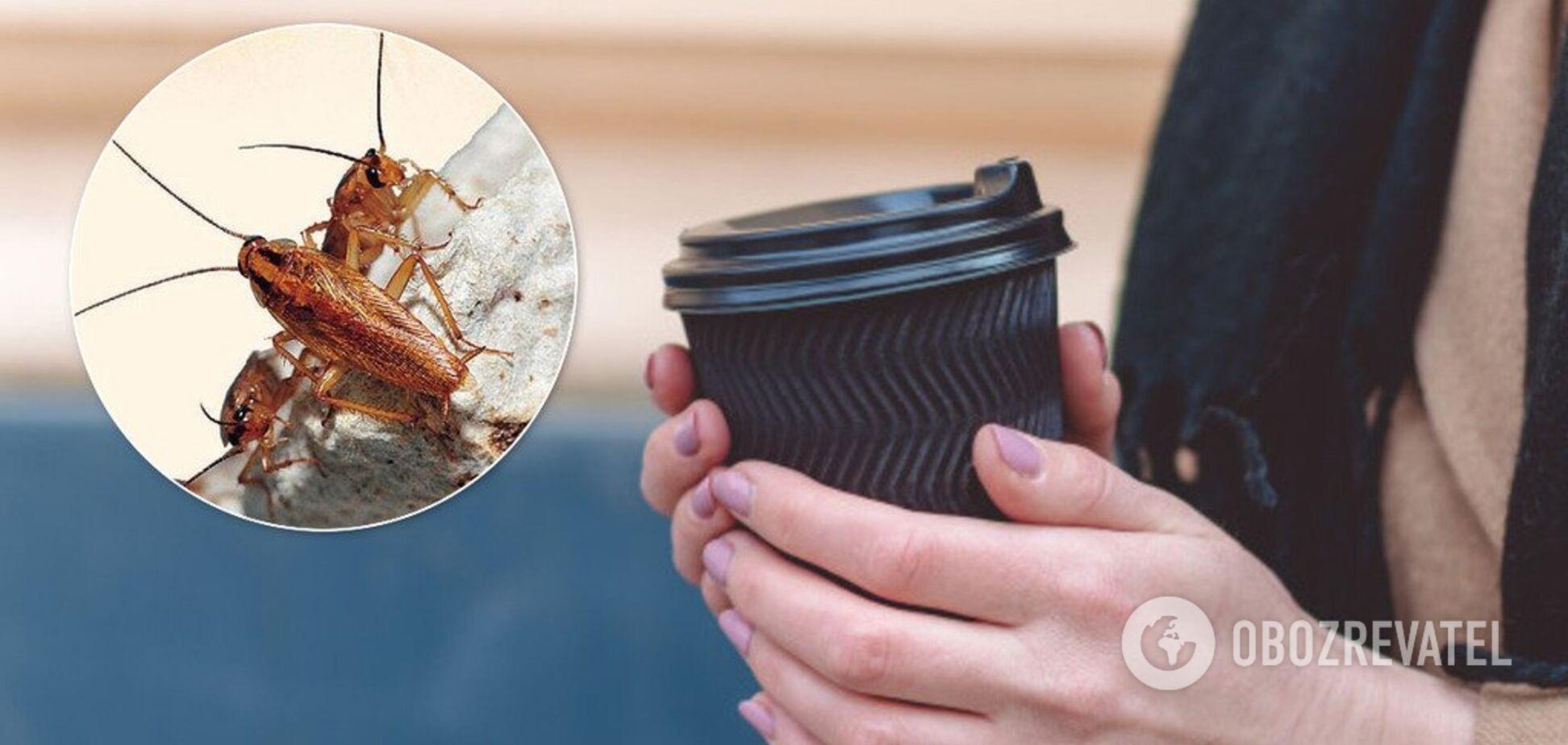 Какао с тараканами: популярная пиццерия Киева попала в громкий скандал. Фотофакт