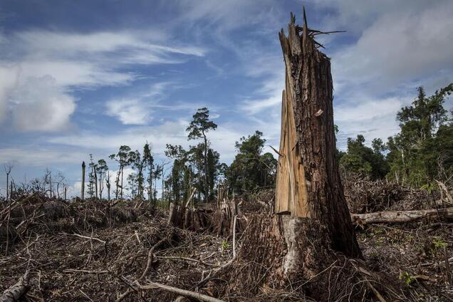 Территория незаконной вырубки лесов на Карпатах