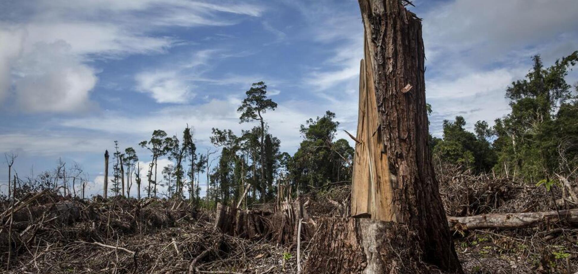 Обігнали Африку і Південну Америку: Україну назвали 'рекордсменом' зі знищення та вивезення лісів
