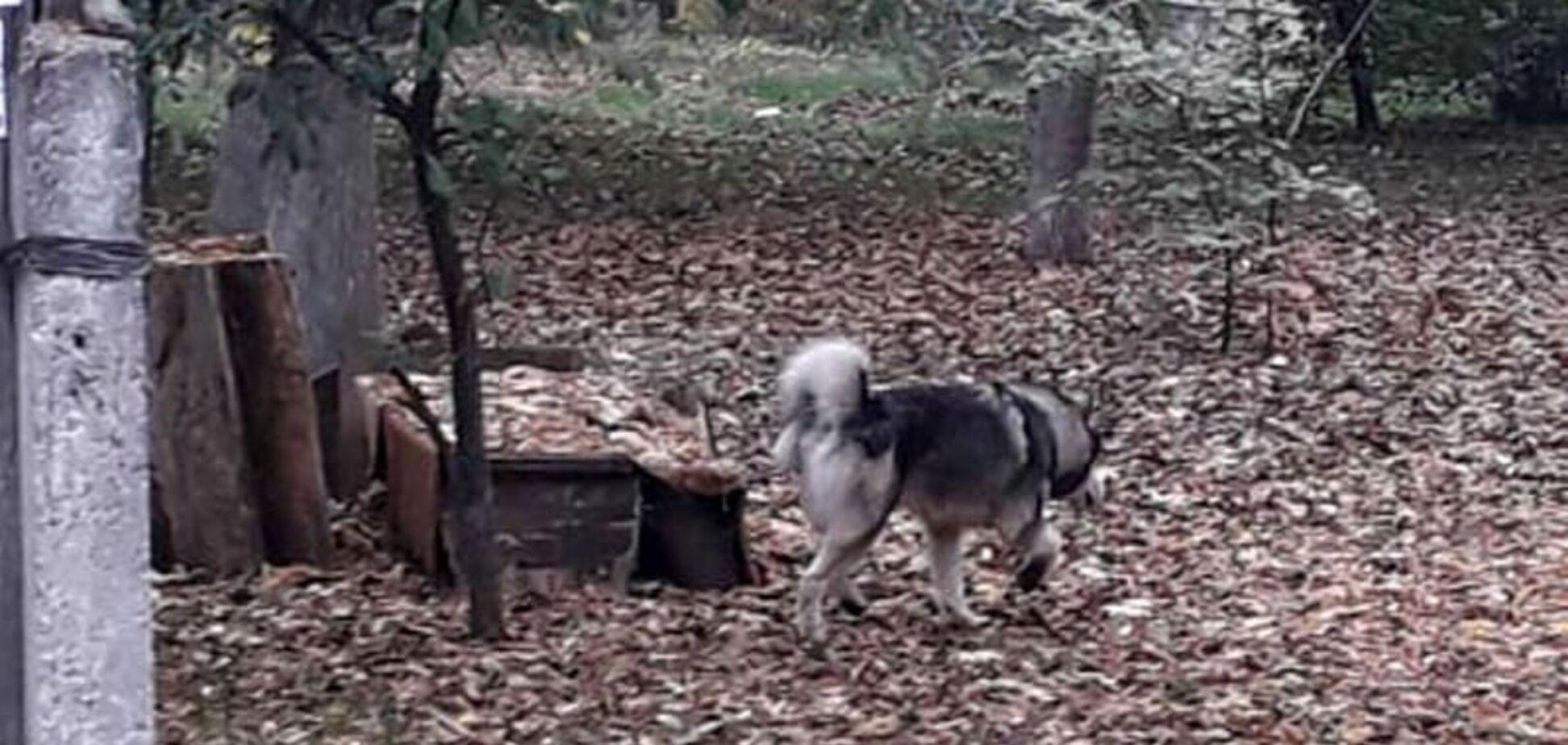 'Повалив і почав гризти': під Дніпром собака напав на дворічну дитину