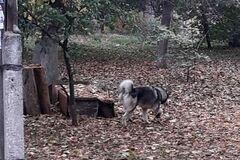 <strong>'Повалила и начала грызть'</strong>: под Днепром собака напала на двухлетнего ребенка