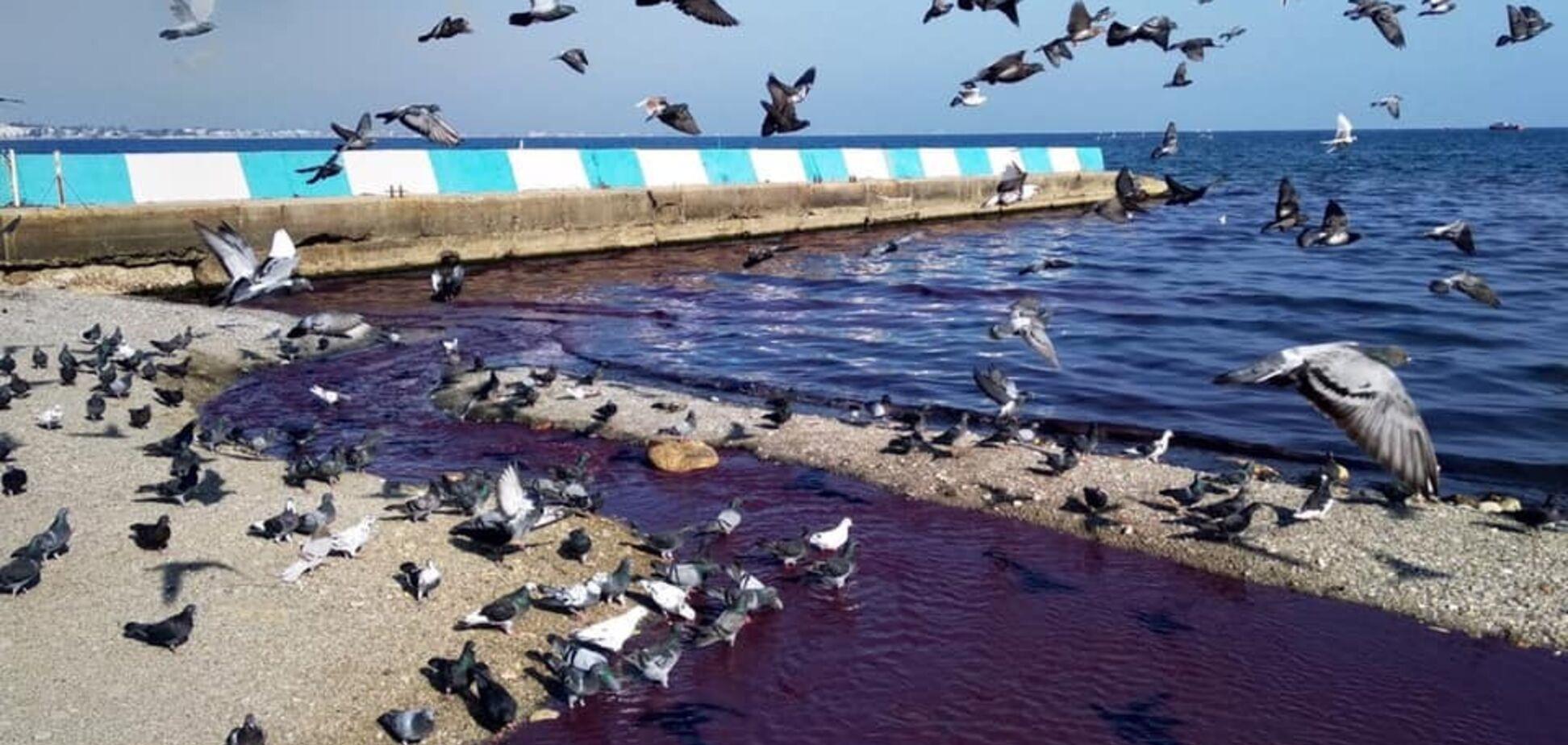 Текут фиолетовые реки: в Крыму произошло ЧП с Черным морем. Фото и видео