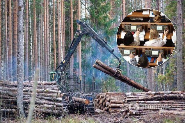 Монобольшинство поддержало законопроект о введении запрета на сплошную вырубку лесов в Карпатах