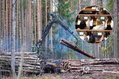 'Слуги народу' спростили вирубку Карпат: екологи забили на сполох