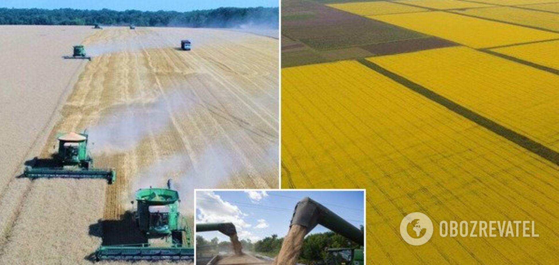 Перемагали посуху і боролися за працівників: українські аграрії підбили підсумки 2019 року