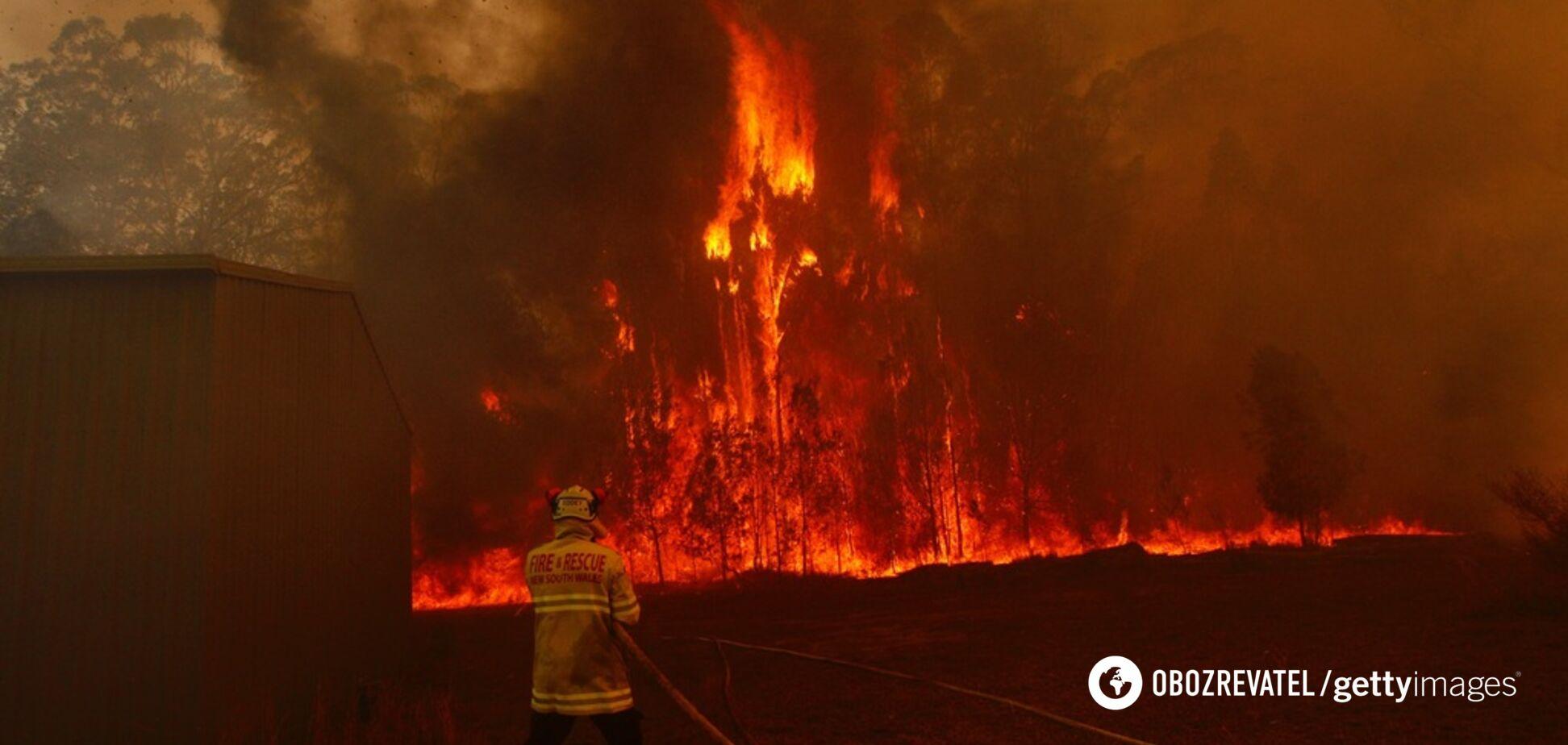 Вигорів мільярд гектарів: Австралію накрили страшні пожежі. Фото, відео