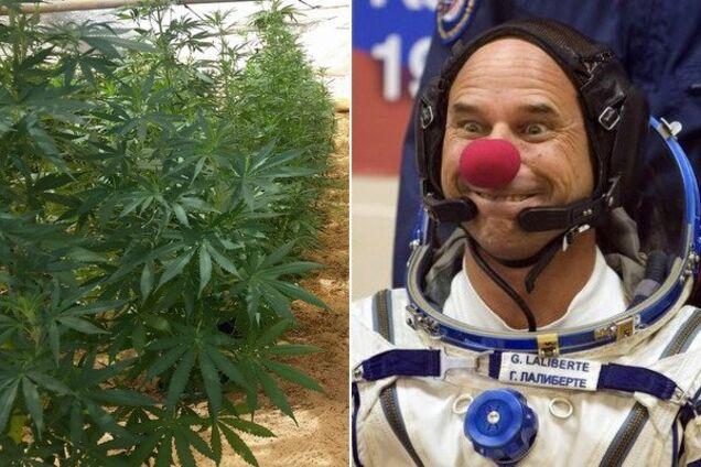 Ги Лалиберте обвиняют в выращивании марихуаны.