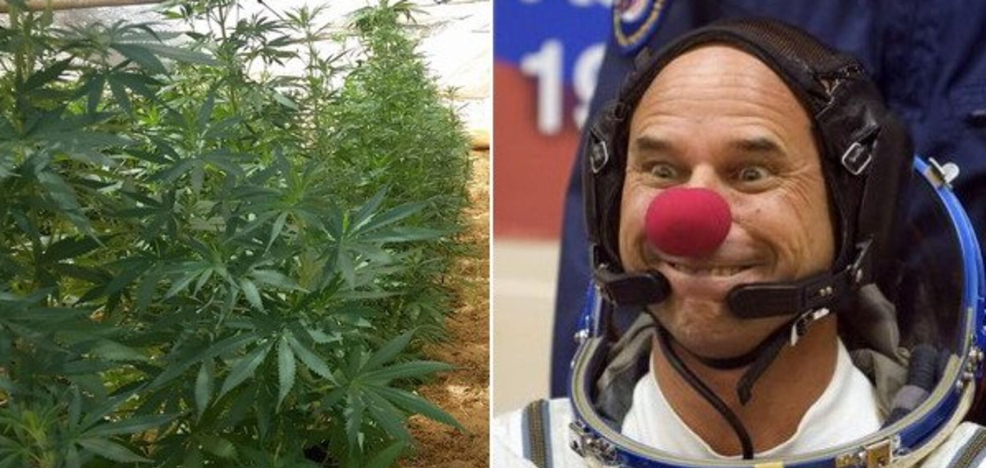 Гі Лаліберте звинувачують у вирощуванні марихуани