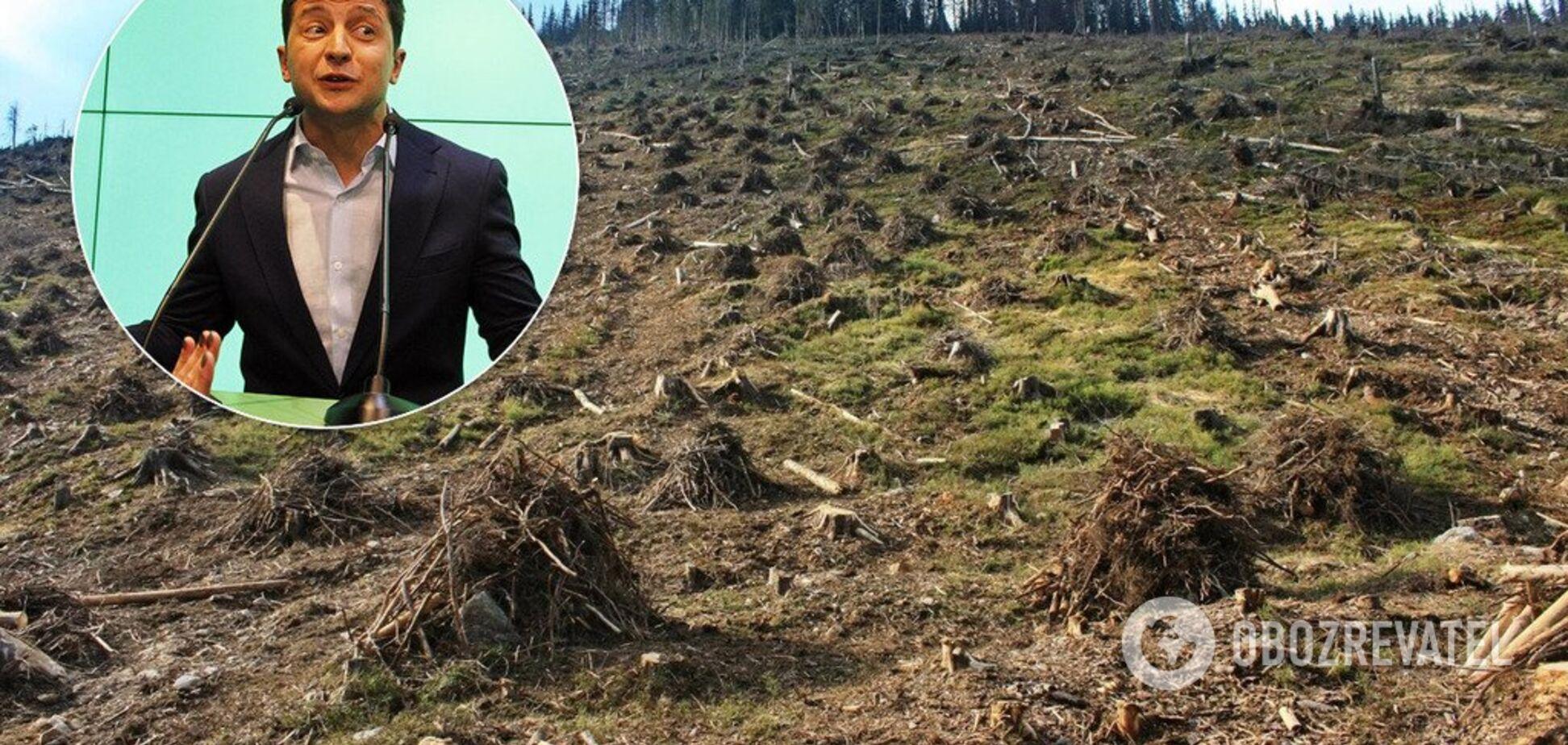 На старі схеми своїх людей: команду Зеленського викрили в підлості з вирубкою лісів