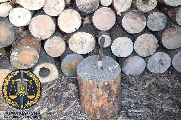Лесники уничтожали лес