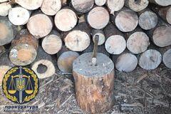 Лесники срубили деревьев на 100 млн грн: раскрыта масштабная схема под Харьковом