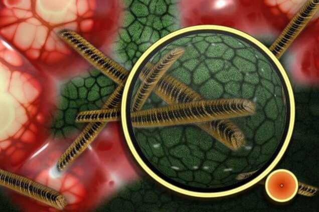 В організмі людини знайшли новий вірус