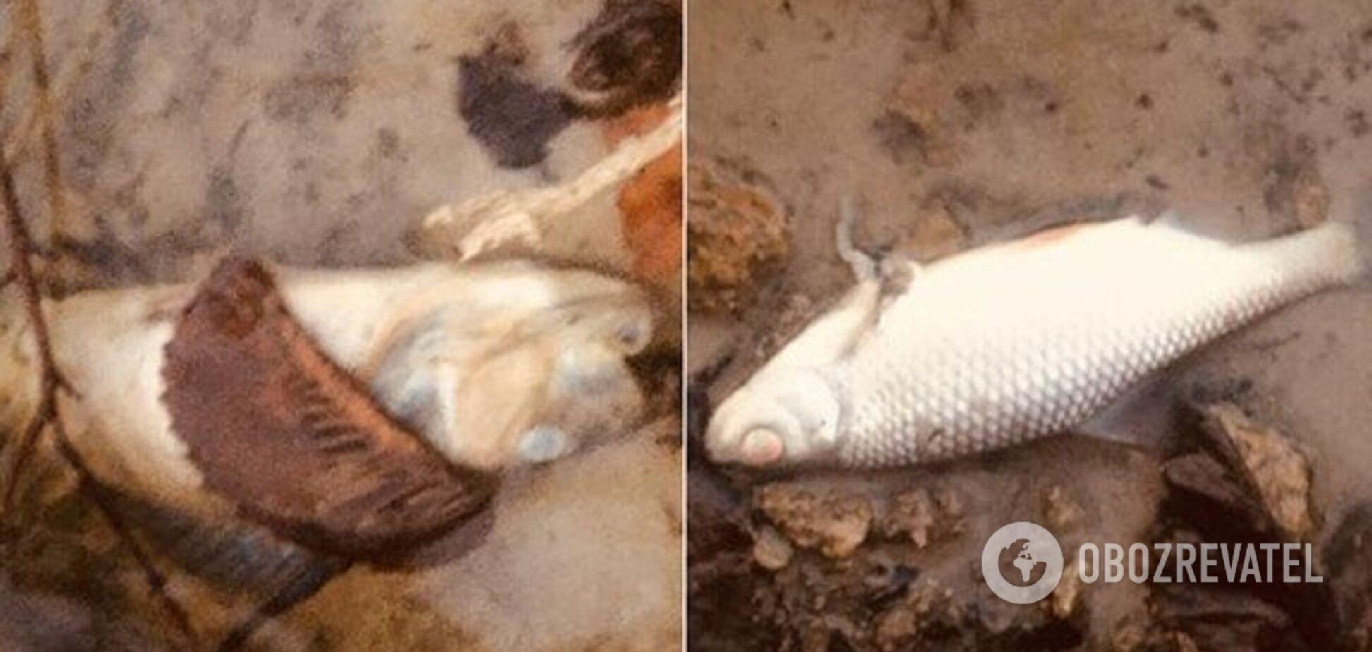 Ужасная вонь и мертвая рыба: под Днепром назревает экологическая катастрофа