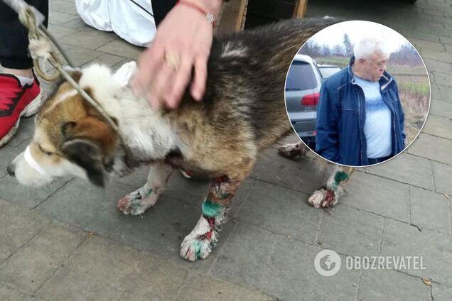 Владимир Байдич жестоко поиздевался над своей собакой