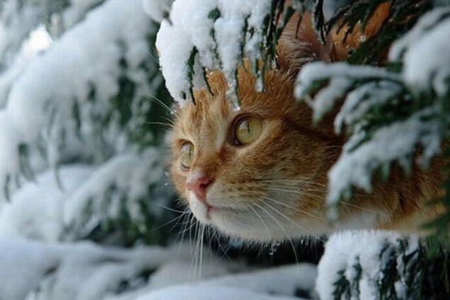 Погода взимку