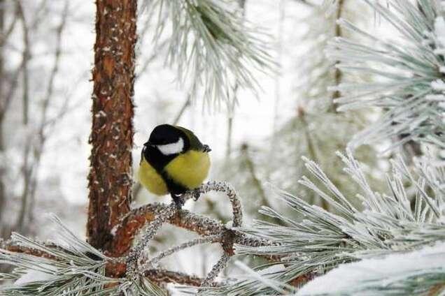 Зима в Украине