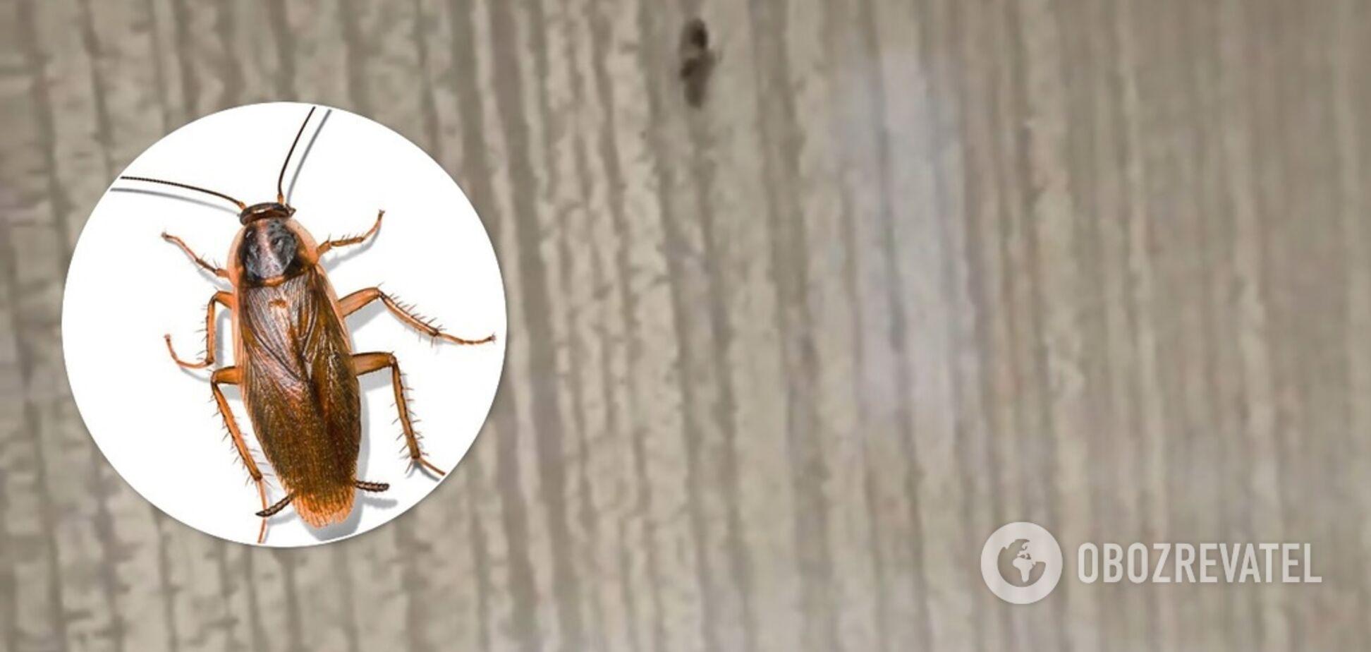 Усе купе в тарганах! У мережу потрапило моторошне відео з поїзда Харків – Одеса