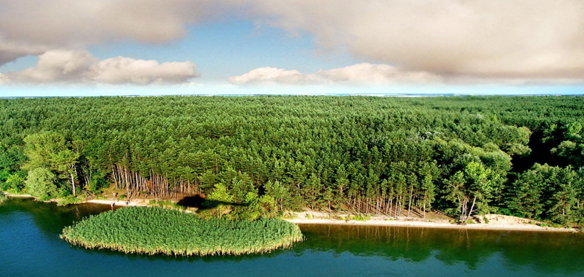 На Печенізькому водосховищі розікрали лісовий фонд