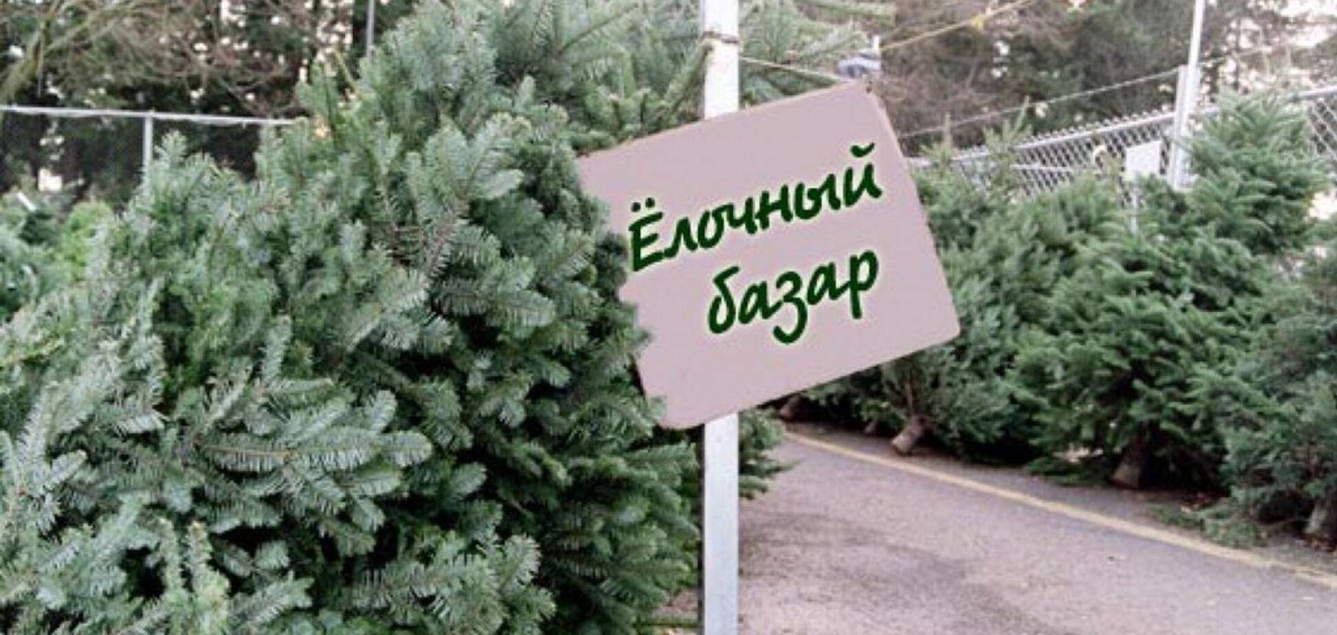 Елка на Новый год-2020: сколько украинцы заплатят за живые и искусственные украшения