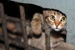 Будут умирать долго: в Днепре устроили жестокую ловушку для котов, сеть в гневе