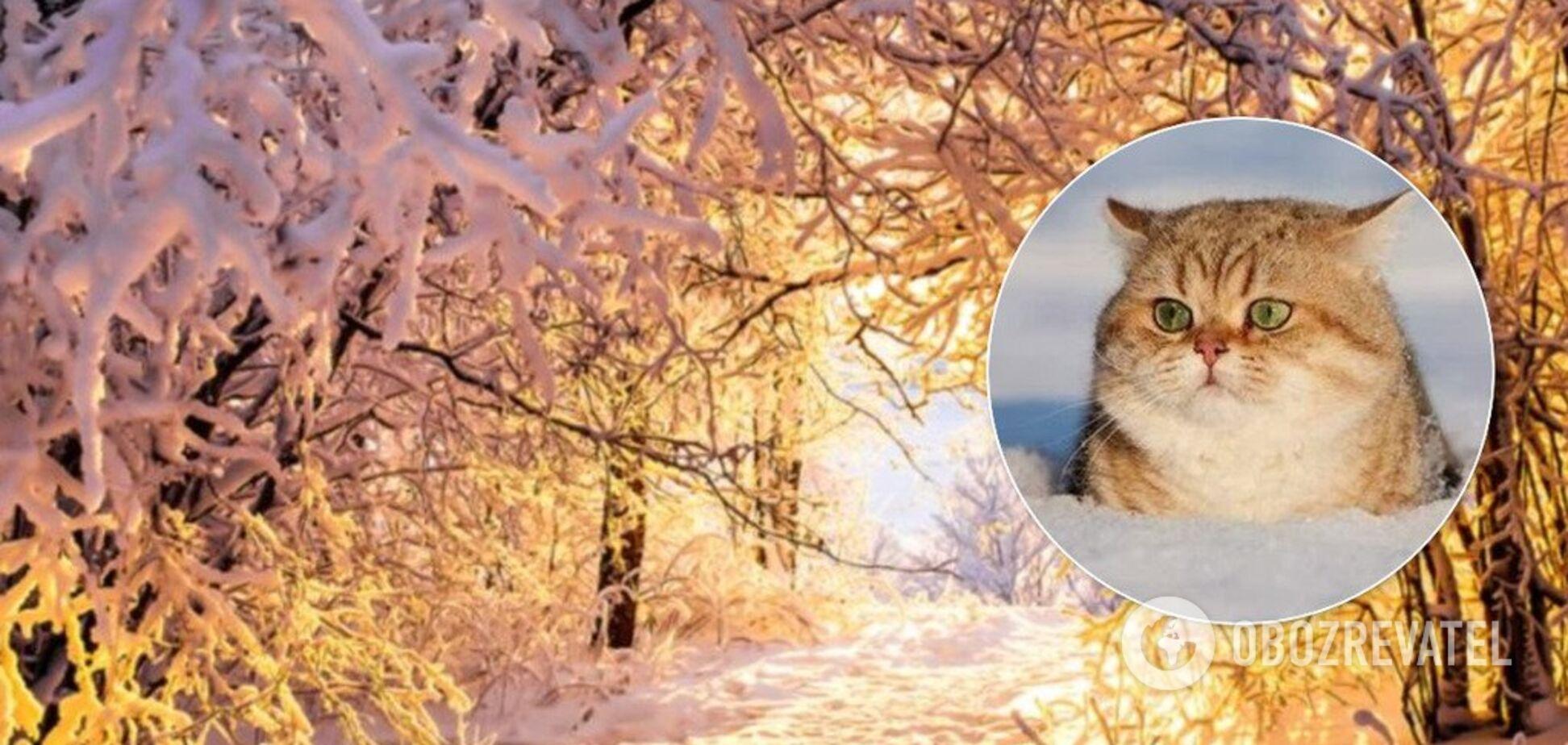 Даже до +10°! Озвучен прогноз на начало декабря в Украине
