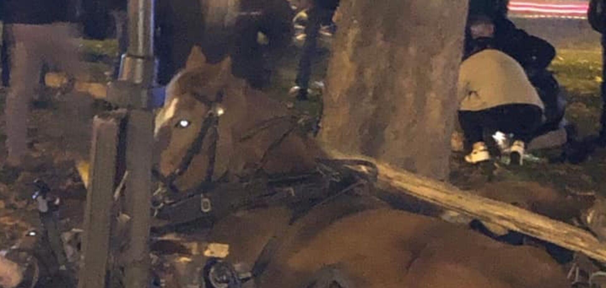 У центрі Львова переляканий кінь тяжко травмував дитину: нові подробиці