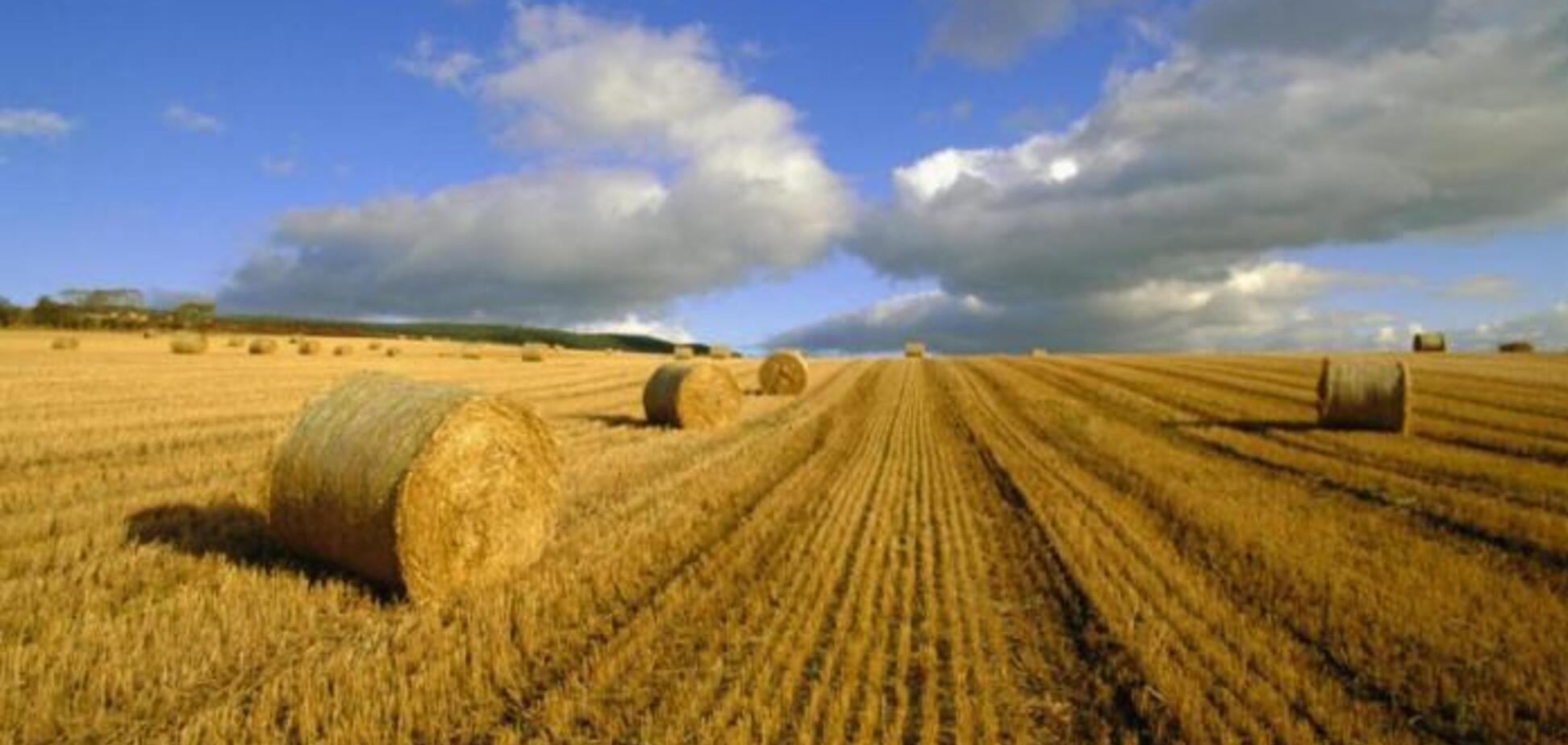 Земельний шпагат президента: земельна революція чи земельний анбандлінг