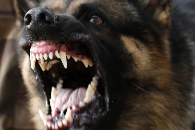 Домашняя собака загрызла хозяйку