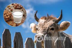 Коровье молоко или растительное: что полезнее