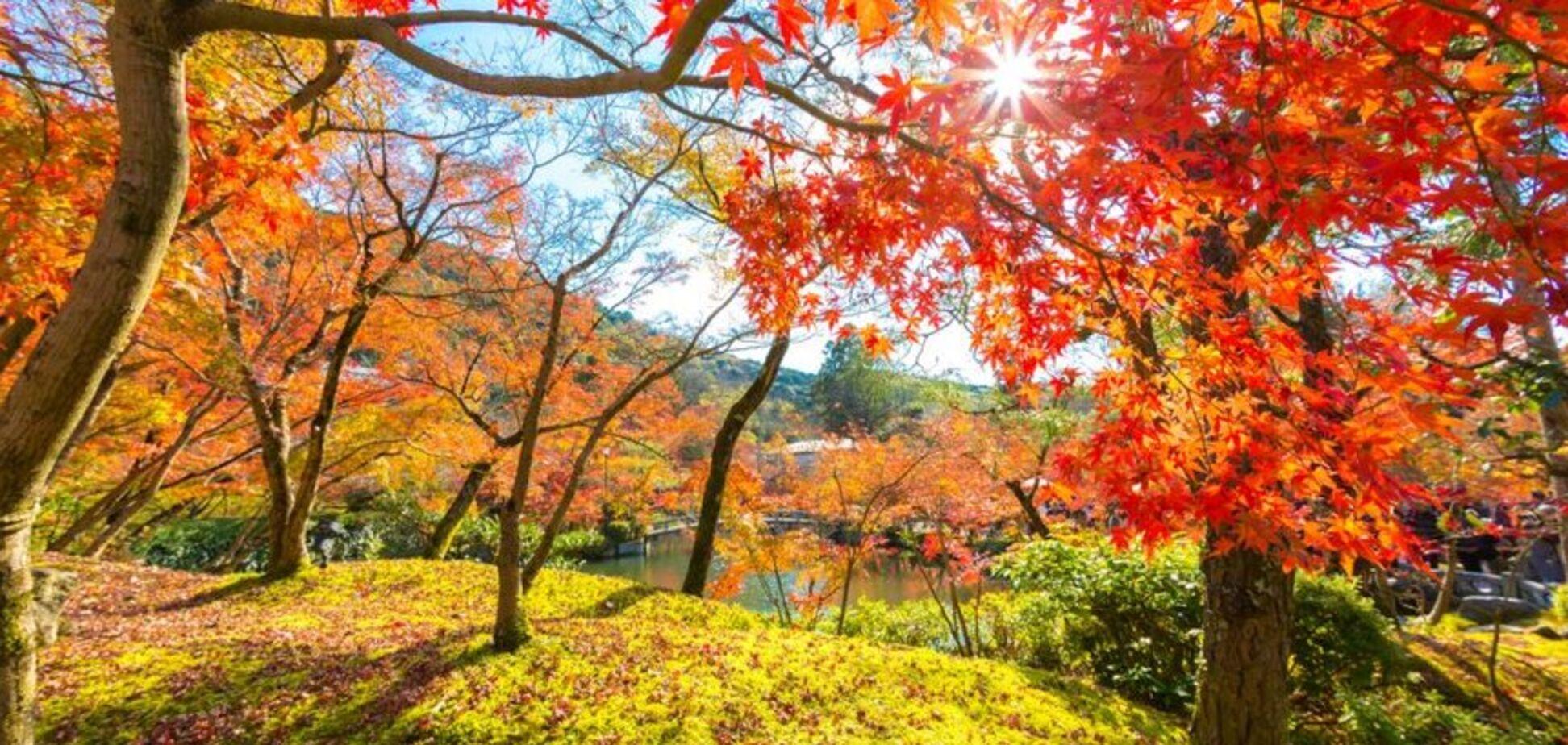 Аномальное тепло: синоптики изменили прогноз погоды на ноябрь