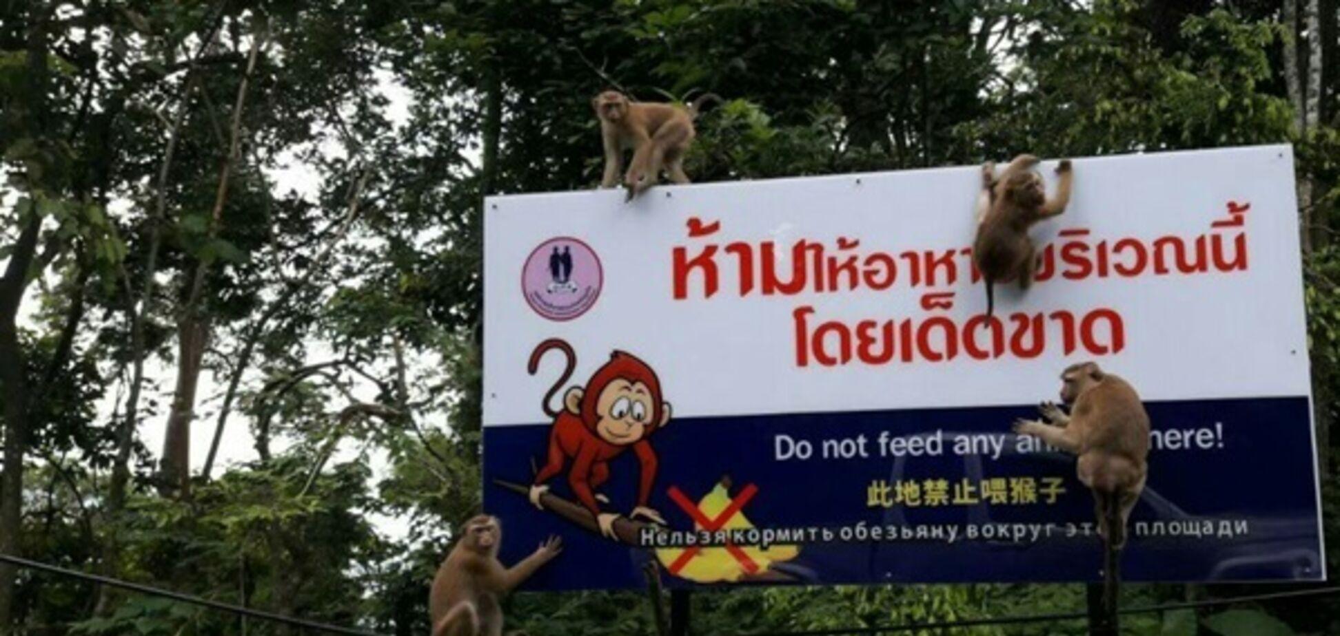 'Русофобка?' У Таїланді мавпа покусала туриста з РФ: у мережі потішаються