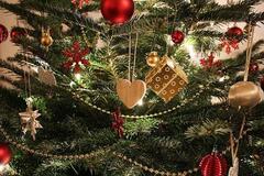 От 150 гривень до 1000 долларов: цены на елки в Днепре