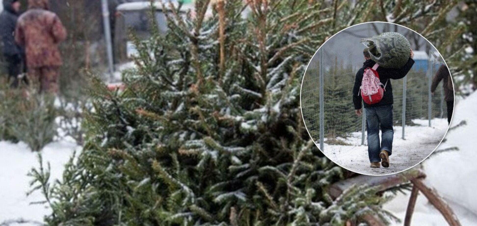 Украинцам привозят елки с кладбищ: как правильно выбрать и сколько стоят