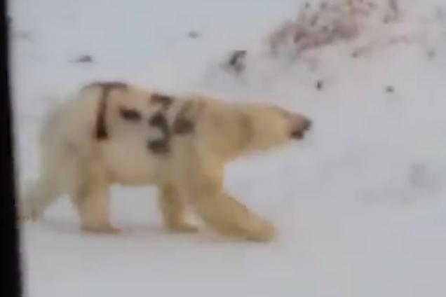 Ведмідь, з якого познущалися невідомі