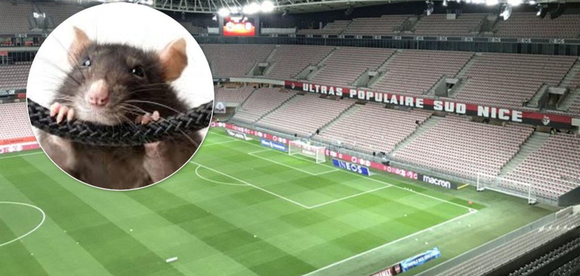 В чемпионате Франции по футболу мыши сгрызли проводку
