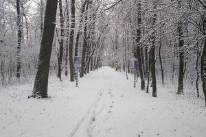 Лес на севере Одесщины засыпало первым снегом