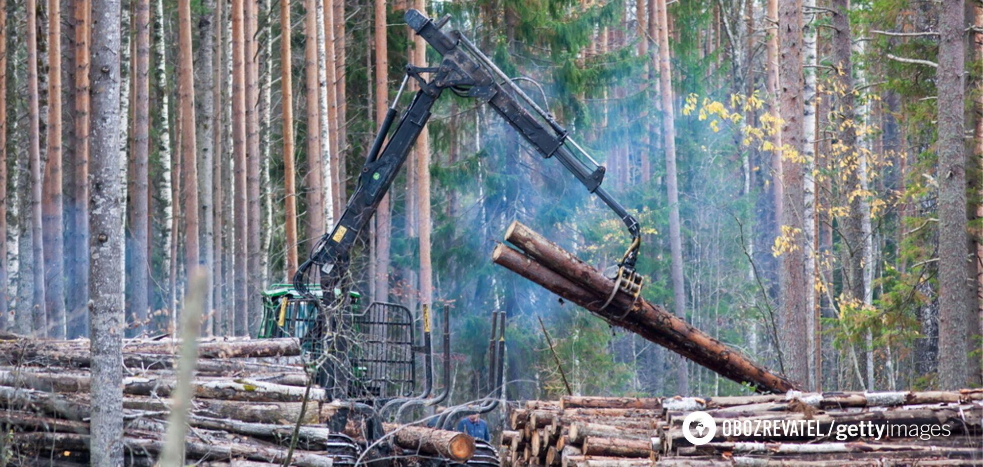 В Украине запустили продажу леса через онлайн-аукционы