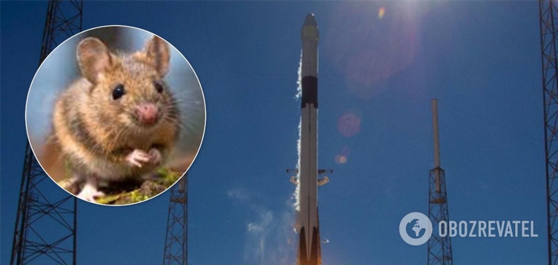SpaceX запустила в космос тварин-мутантів. Відео
