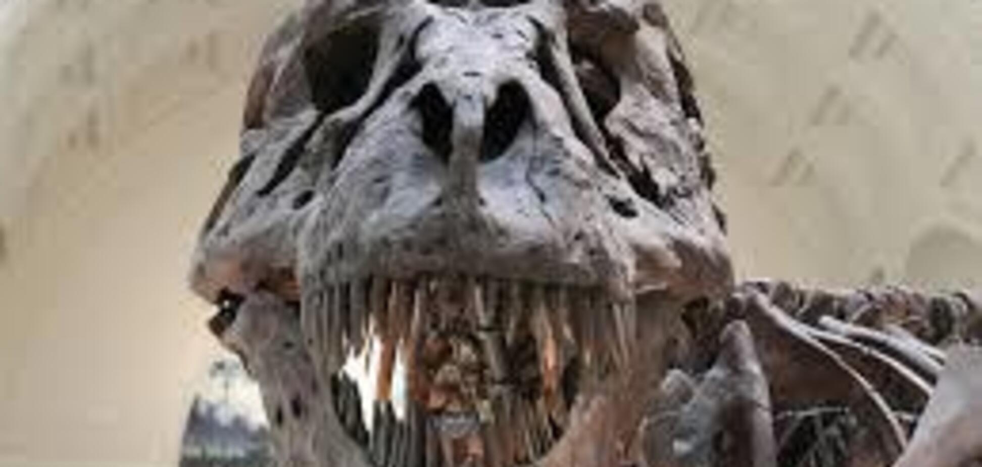 Житель Узбекистана обнаружил скелет динозавра под домом: фото впечатляющей находки
