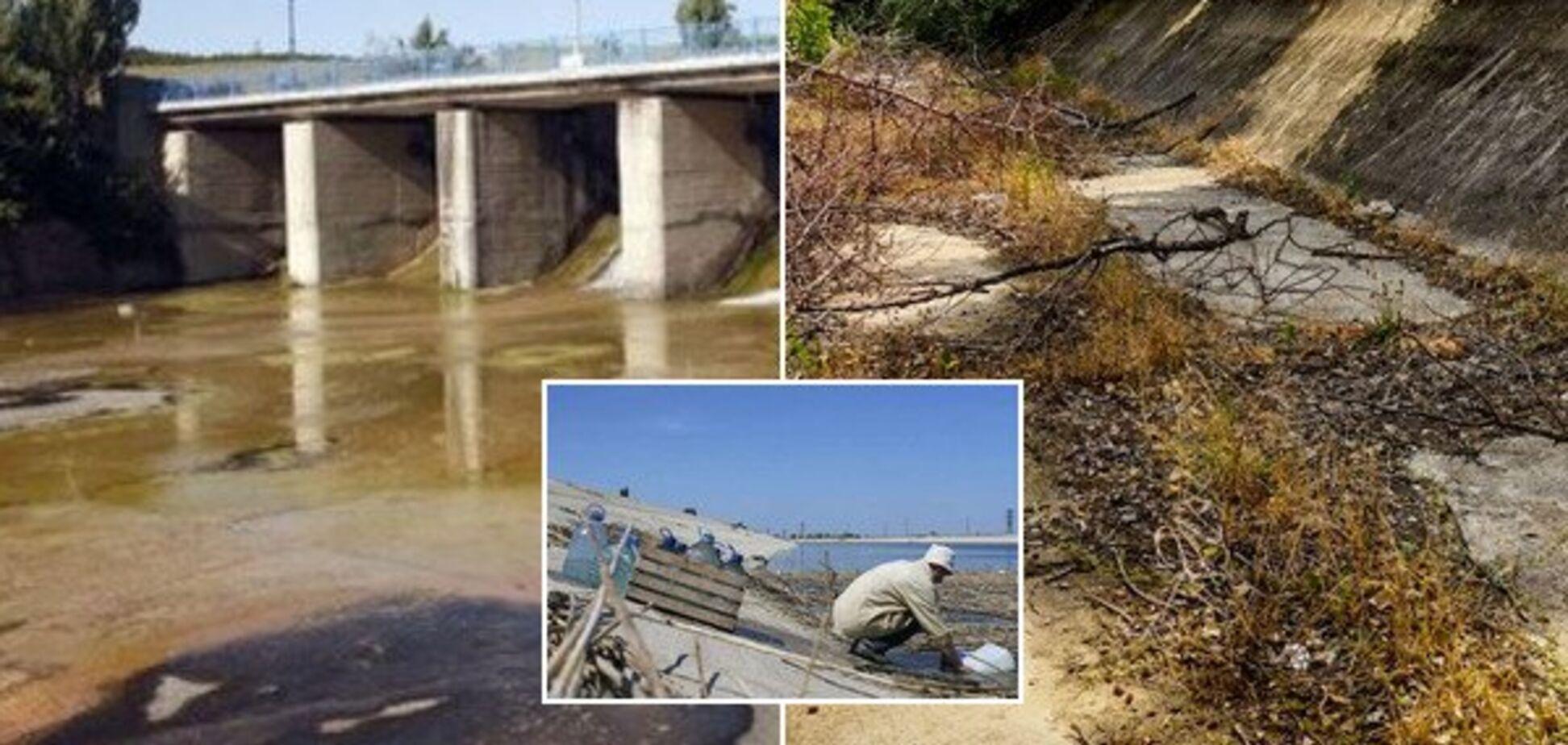 Люди залишають будинки, вода отруєна. У Крим прийшла нова біда
