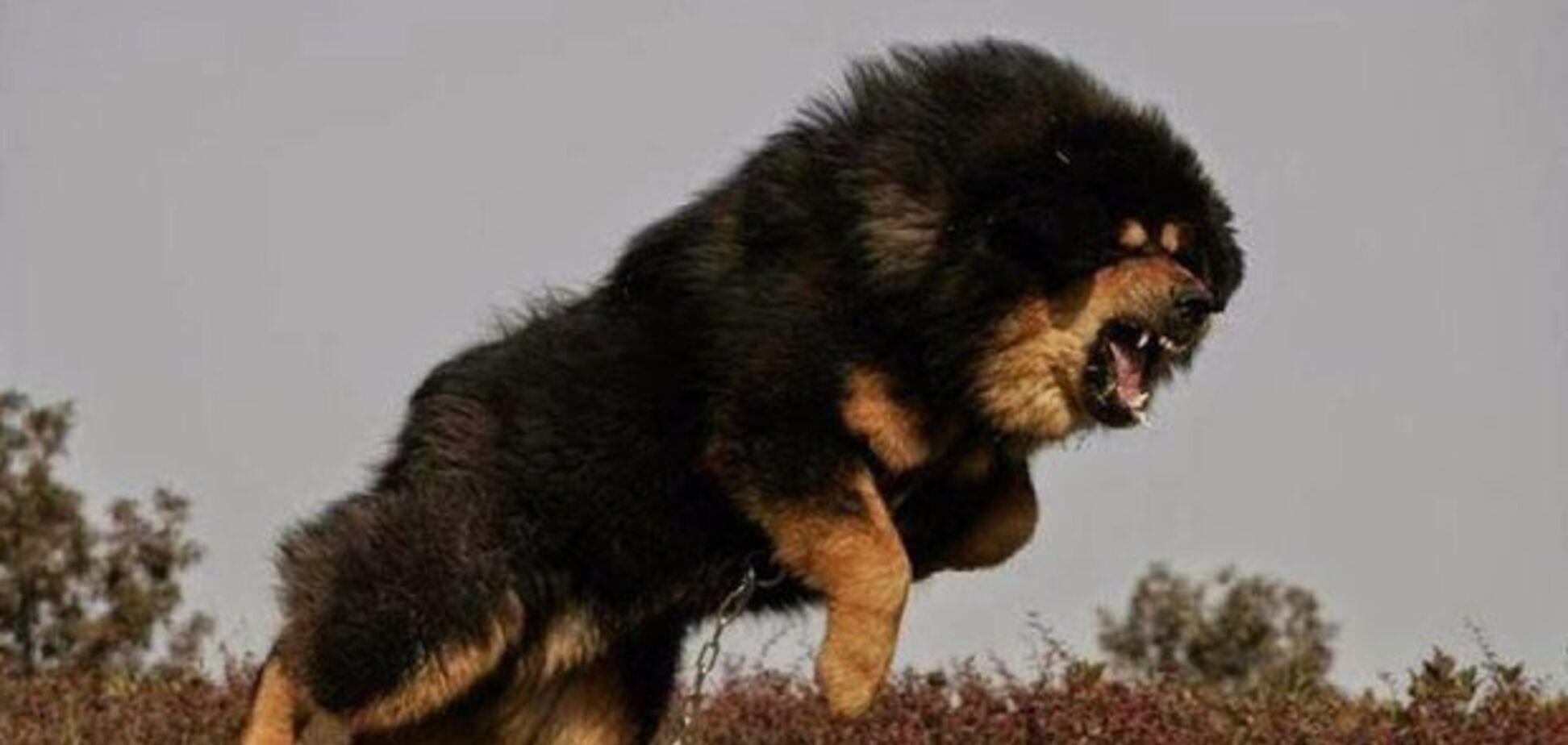 Юных фигуристок в России едва не загрызли собаки