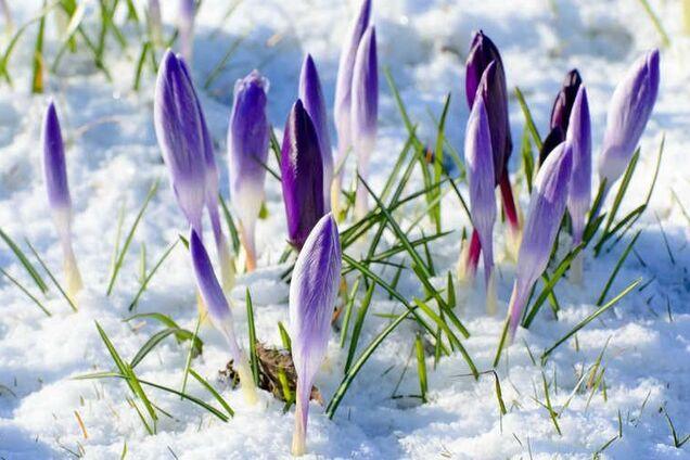 Синоптики дали подробный прогноз на март