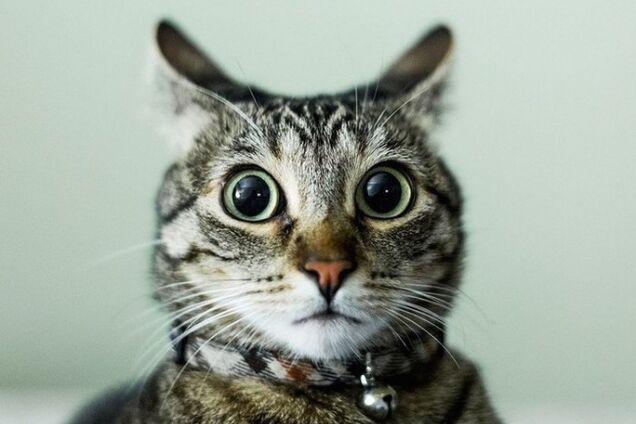Кіт здивований