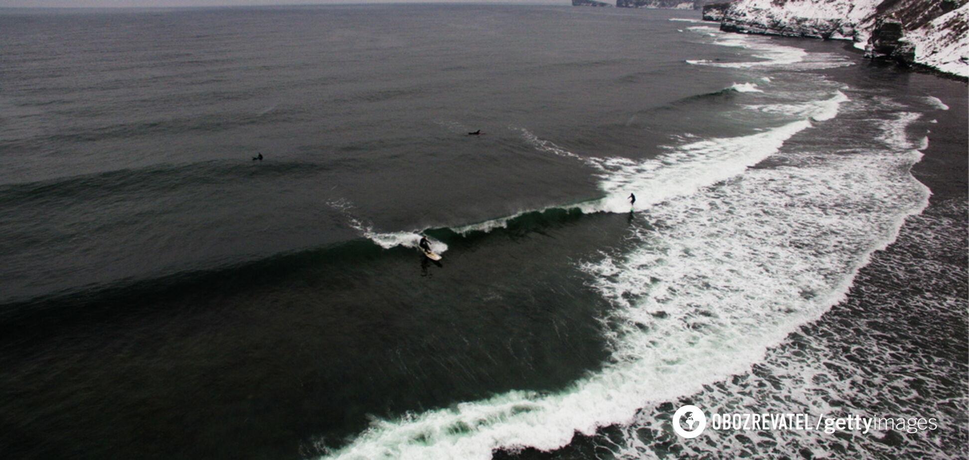 В Японии на побережье выбросился ''посланник Бога моря'': фото гиганта