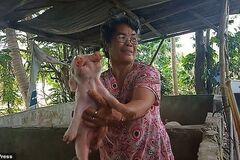 Два носа, три глаза: на Филиппинах родился двуглавый мутант. Шокирующие кадры