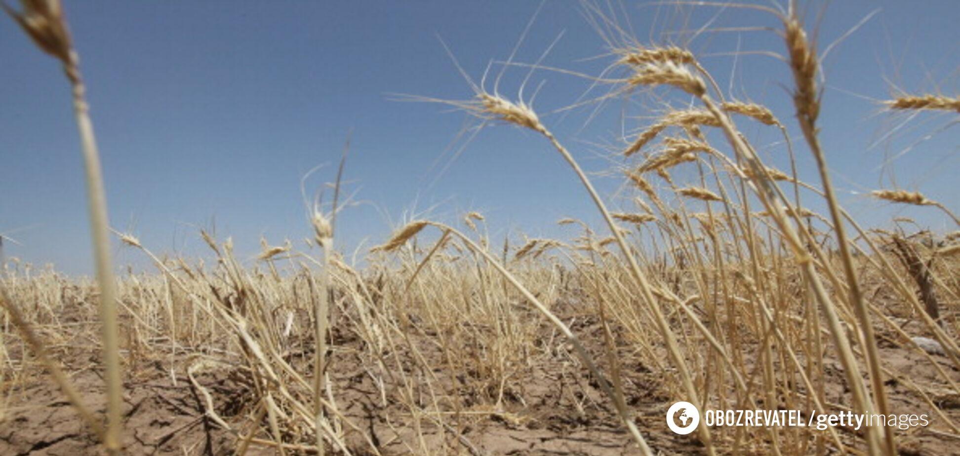 Катастрофическая засуха в Крыму обострилась: оккупанты положили глаз на реки