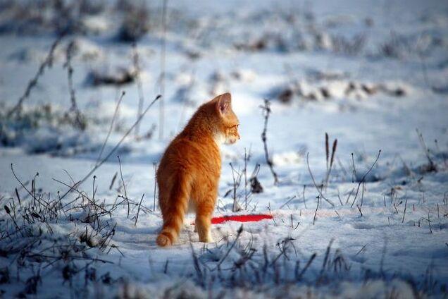 Зима возвращается: синоптики предупредили о похолодании в Украине